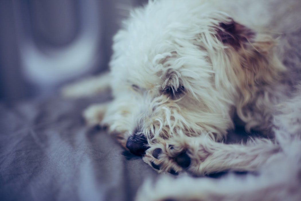 The Importance of Caring for Your Dogs Paws 6