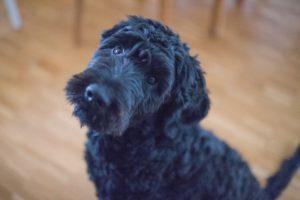 Organix Dog Spa: Healthy Dog Grooming Services Manor Lakes 4