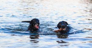 Organix Dog Spa: Healthy Dog Grooming Services Manor Lakes 2